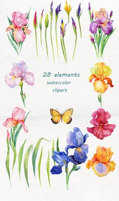 iris flowers. watercolor clipart,28 elements in PNG ( transparent background )and floral background Item details: •28 elements in 11 (PNG ) transparent background • floral background JPEG 7500*4083 (300 DPI) You can use these watercolor flowers cliparts for design of cards,invitations,decorating your blog or website. You can use our graphics for personal or small commercial project Please contact me if you need a commercial license