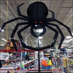 Giant Halloween Spider Pounces at Sams Club – Fixtures Close Up Halloween Spider, Sams, Insects, Retail, Club, Sleeve, Retail Merchandising