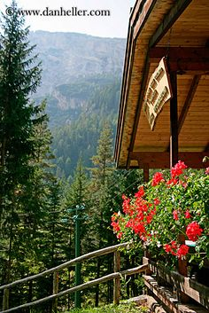 balcony-geraniums.jpg alto adige, balconies, dolomites, europe, flowers, geraniums, images, italy, vertical