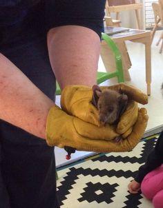 Save the Bats (@BatConservation) | Twitter