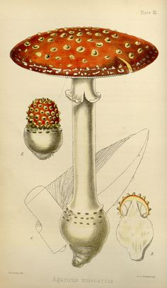 1000+ images about HND Mycologie on Pinterest | Mushroom ...