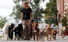Imagine for a moment you�re on the streets of Buenos Aires eating a factura and drinking a mate (because that�s what you do in Buenos Aires) and someone passes you walking 20 dogs. #Argentina #BuenosAires #Dogs