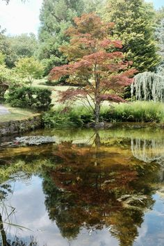 Acorus - Gartenanlage mit vielen Teichen (Franche-Comté) River, Outdoor, Lily Pond, Small Places, Water Garden, Formal Gardens, Outdoors, Outdoor Living, Garden