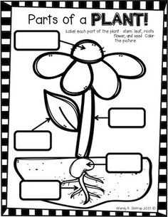 Use this printable to help reinforce what students know about plants!  Your children can label the parts of a plant and then color the sheet.  Use this in a Science center or in whole group.Enjoy!Check out my blog at www.outrageousfun321.blogspot.com Kinder Science, Kindergarten Science, Elementary Science, Science Classroom, Science Lessons, Science Activities, Teaching Science, Science Education, Parts Of A Flower