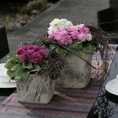 Vielfältige Frühlingsboten: Primeln auf Balkon und Terrasse pflanzen