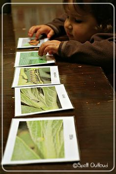 Butterfly Life Cycle Cards from The Montessori Print Shop.