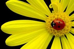 Lady bugs are beneficial insects. I plan to order more lady bugs this year to help control my garden pests!