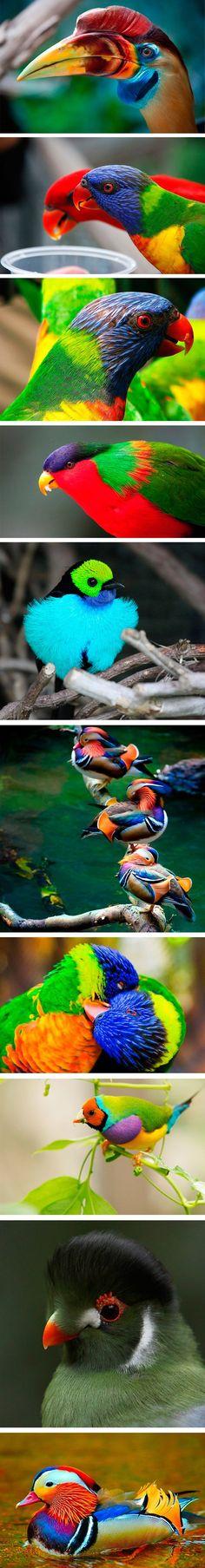 Die farbenfrohe Welt der Vögel - Win Bild | Webfail - Fail Bilder und Fail Videos