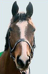 Shergar: The Mystery behind Ireland's 'Pegasus' Part I | Horse Canada