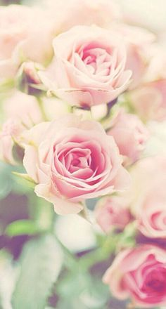 Iphone wallpapers, true friendship, winnie the pooh, pink rose, teas quotes Whatsapp Wallpaper, Spring Wallpaper, Rose Wallpaper, Wallpaper Backgrounds, Iphone Wallpapers, Live Backgrounds, Decoupage Vintage, Couleur Rose Pastel, Rose Family