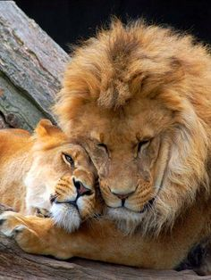 Lion King & his queen
