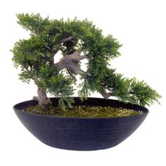 add a touch of zen to your home or office interiors with this artificial cedar bonsai add bonsai office interior