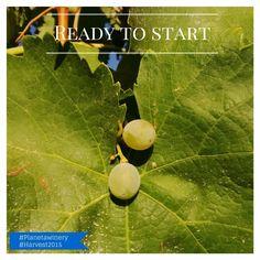Ready to start! #Harvest2015 #Planetawinery  #Vendemmia2015 Photo Patricia Tóth