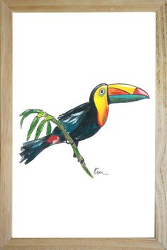 illustration collection toucan tropical catchii design drawing home styling
