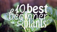 10 Best Beginner Plants - These guys grow veggies AND they have a sense of humor. What more could you want ?