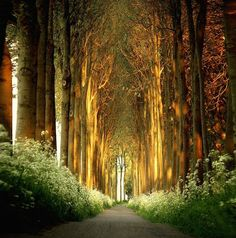Amsterdamse Bos Park, Netherlands... love the lighting effects here.