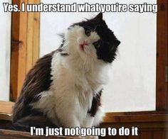 """And, THAT, is the definition of """"cat."""""""