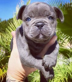 """466 Likes, 19 Comments - H A M I L T O N 