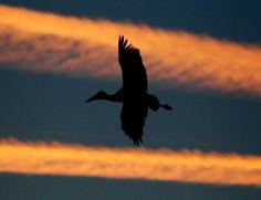 Extremadura promociona por primera vez el turismo ornitológico en América http://www.extremadura7dias.com/lector.php?id_articulo=15685…
