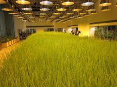 Urban farm building  by KonoDesigns in Tokyo