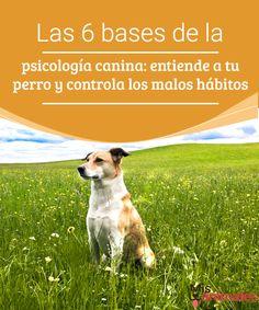 Las 6 bases de la psicología canina: entiende a tu perro y controla los malos hábitos - Mis animales  Parte de controlar los malos hábitos de nuestro perro es entender como piensa. Te presentamos las 6 bases de la psicología canina.