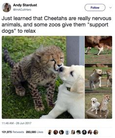 Things that make you go AWW! Like puppies, bunnies, babies, and so on. A place for really cute pictures and videos! Funny Animal Memes, Cute Funny Animals, Cute Baby Animals, Funny Cute, Animals And Pets, Funny Memes, Funny Best Friend Memes, Funny Humour, Funny Pics
