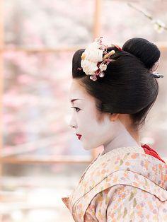 Maiko - Kyoto,  Japan at The Japanese Apricot Festival.