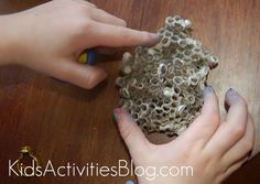 making and deconstructing {uninhabited} nests