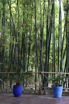 Style of bamboo fence. I've built a similar one from backyard bamboo, but I like this one better. Jardin Majorelle featured in May 2012 Lonny