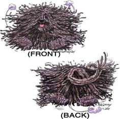 Hungarian Puli Dog ~ front versus back -- look for the tongue Hungarian Puli, Mop Dog, All Dogs, Dogs 101, Puli Dog, Komondor, Goofy Dog, Herding Dogs, Dog Show