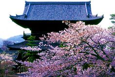 The secret cherry blossoms of Kyoto | JAPAN Monthly Web Magazine