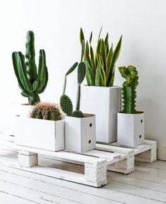 Green & White - indoor plants