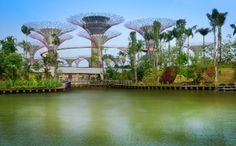 Dragonfly & Kingfisher Lakeshttp://www.gardensbythebay.com.sg/en/the-gardens/attractions/supertree-grove.html