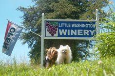 Little Washington Winery and Vineyards - Wine Bootcamp!