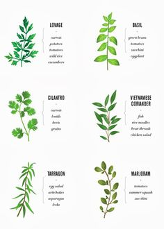 Herb pairing with food