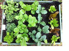 Mara Kai Koanga Planting Planting, Healthy Lifestyle, Recipes, Maori, Plants, Recipies, Healthy Living, Ripped Recipes, Cooking Recipes
