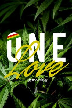 ONE LOVE Marijuana Quotes by StonerDays http://stonerdays.com