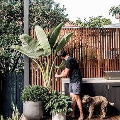 Backyard inspo - How good are long weekends Gardens love it just as Outdoor Plants, Outdoor Areas, Outdoor Rooms, Outdoor Bbq Kitchen, Balkon Design, Alfresco Area, Garden Screening, Bbq Area, Outdoor Entertaining
