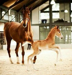 Cute mare and foal.