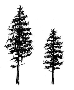 Pine tree tattoo design