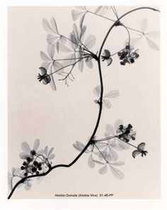 Xray Flower = omg - this would be a fabulous tattoo