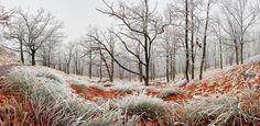 Frozen forest - Tomas Sereda, 500px