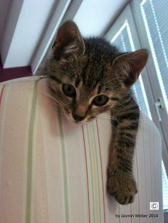 kitycat