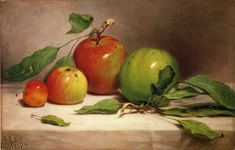 The Athenaeum - Still Life - Study of Apples (William Rickarby Miller)