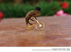 Classy chameleon…
