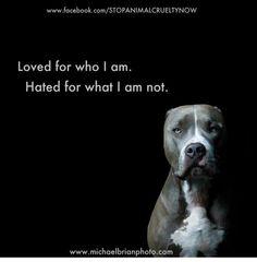 pitbulls=love!!!