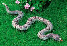 Schlange als Vogelscheuche. Die dürfte nicht nur Vögel vertreiben.