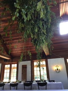 Foliage installation created at Roberts c1876 pokolbin , Hunter valley. Perfect to work in with exposed beams  www.jademcintoshflowers.com.au