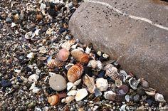 Geologia e Cucina: Una spiaggia, una panchina e tanta pioggia  http://geologiaecucina.blogspot.it/2016/04/una-spiaggia-una-panchina-e-tanta.html