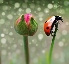 two in one by Rahman O Rahim on 500px